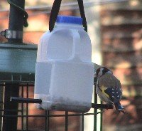 goldfinch on milk carton feeder
